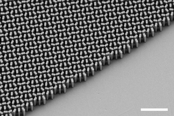Scanning electron microscope micrograph of a metalens fabricated in the Capasso Lab at Harvard SEAS.