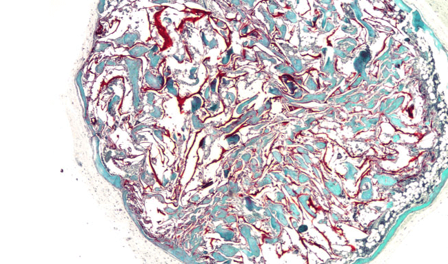 A stained section of the cryogel