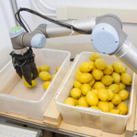 Robot moving lemons 400sq